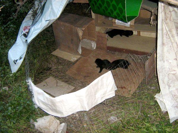 给小狗做纸箱房子