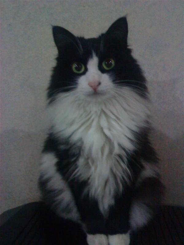 壁纸 动物 猫 猫咪 小猫 桌面 600_800 竖版 竖屏 手机